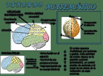 Cerebro y matemáticas